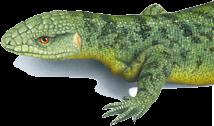 ccss-lizard-logo